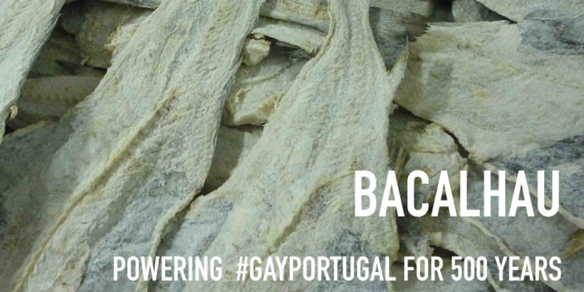 Bacalhau – powering GayPortugal for 500 years